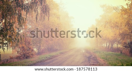 Vintage autumn road in the fog, surrounded by yellow birch - stock photo