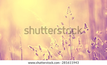 Vintage blurred meadow at sunset with flare. Vintage purple red and yellow orange color filter effect used. Selective focus used.  - stock photo