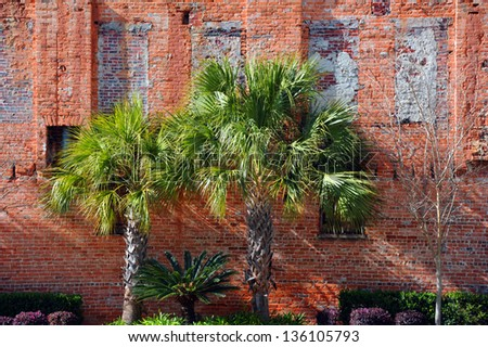Vintage brick wall in downtown Columbia, South Carolina has been landscaped and rejuvenated.  Three Palmetto palm trees stand against rustic brick wall. - stock photo