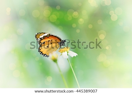 Vintage butterfly. Antique style photo of butterfly on flower .with beauty bokeh - stock photo