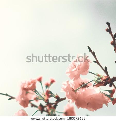Vintage Cherry Blossoms - stock photo