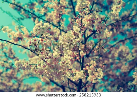 Vintage cherry flowers - stock photo