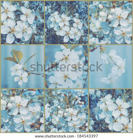 Vintage collage. Cherry blossoms. Art floral background with paper texture overlay. Retro style. - stock photo