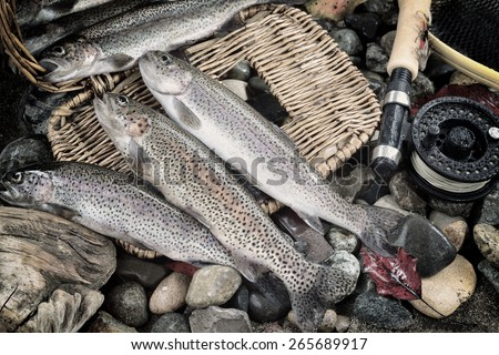 Vintage concept of trout spilling out of fishing creel, with fly reel, pole and late autumn leaves on wet river bed stones - stock photo