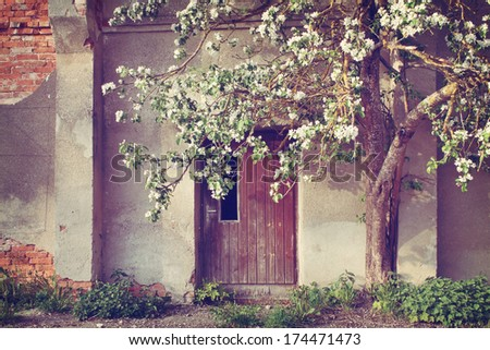 Vintage door and blooming apple tree - stock photo