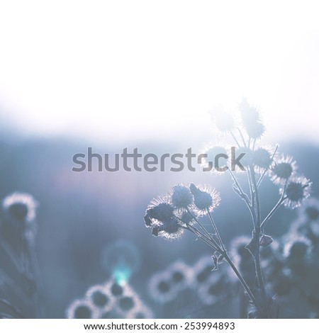 vintage dry meadow plants in field  - stock photo