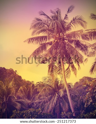 Vintage faded nature background, palms at sunset. - stock photo