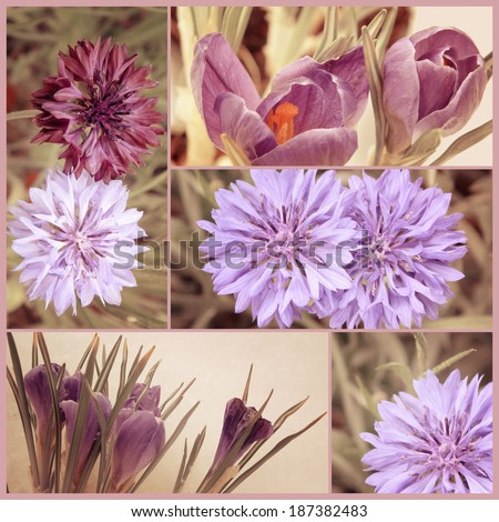 Vintage floral collage. Spring crocus flowers and summer cornflowers. Filtered image in retro style. Art floral background with paper texture overlay. - stock photo