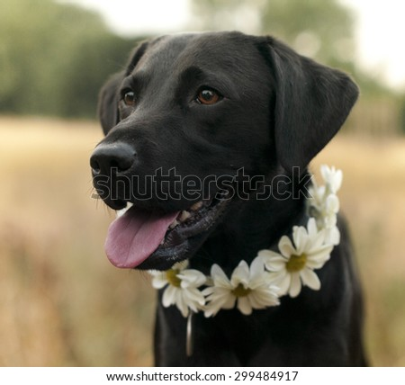 vintage floral collars - stock photo