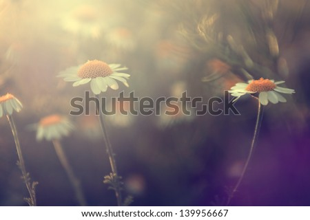 Vintage flower. - stock photo