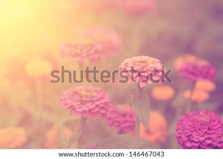 Vintage flower - stock photo