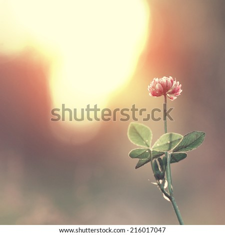 Vintage flower clover on the background of sunrise - stock photo