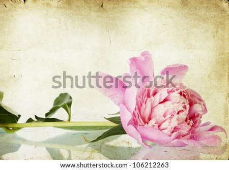 Vintage flower (peony) - stock photo