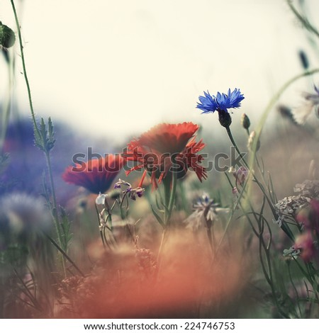 vintage flowers nature background - stock photo