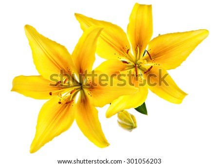 Vintage flowers pattern with yellow lilies isolated on white - stock photo