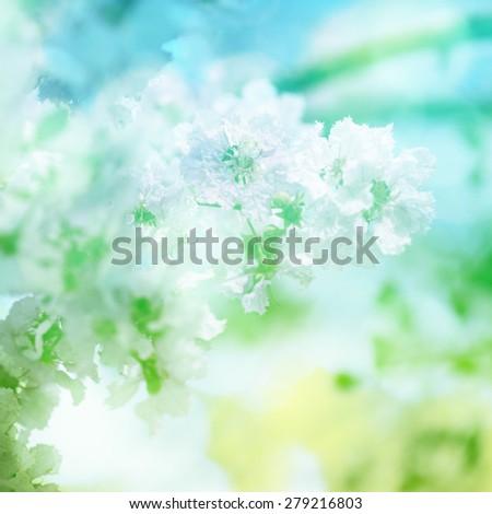 Vintage flowers. vintage color filter effect. - stock photo