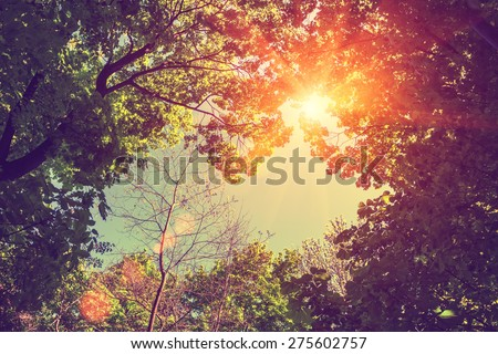 Vintage frame from trees at sunset - stock photo