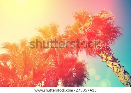 Vintage frame with tropic palm trees against sky at sunset light - stock photo