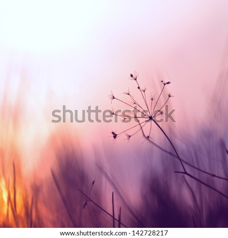 vintage grass plant on summer morning sunrise - stock photo