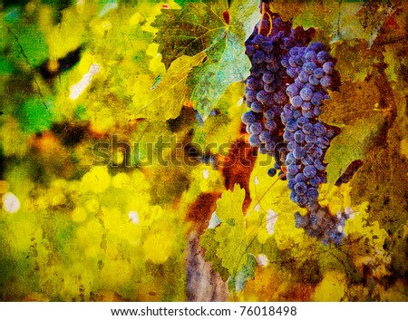 vintage image of grape - stock photo