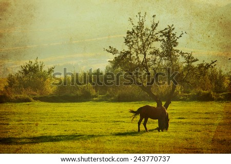 Vintage landscape with horse in meadow. Photo in retro style. Paper texture. - stock photo