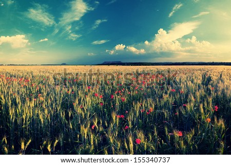 Vintage landscape with wheat field and poppy flowers - stock photo