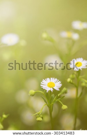 Vintage little white daisy flower and grass for nature agriculture flower abstract background - stock photo