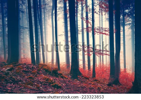 Vintage magic red colored foggy forest scene. Color filter effect used. - stock photo
