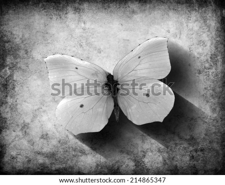 Vintage monochrome butterfly with shadow on a grunge background - stock photo