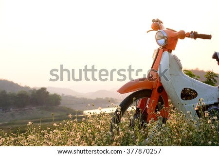 vintage motorcycle and flowers field in the evening time   - stock photo