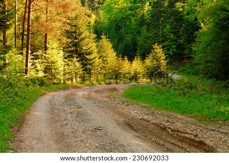 Vintage muddy trace on the forest road in the summer - stock photo