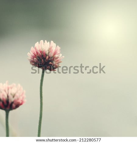 vintage nature flowers background - stock photo