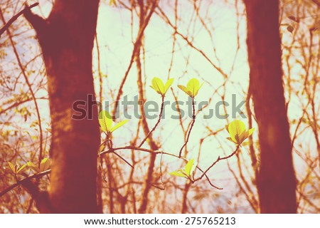 Vintage nature, leaf bud in summer forest - stock photo