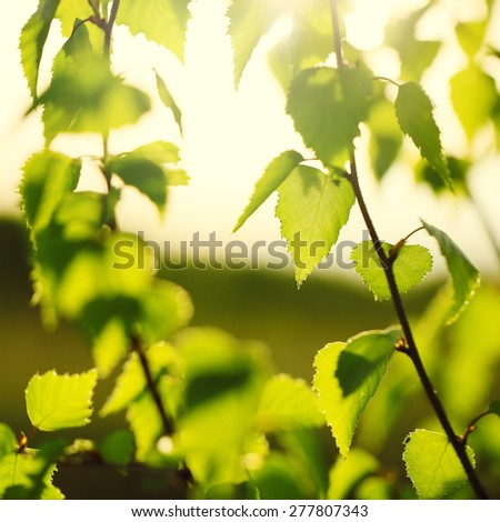 Vintage nature outdoor background. Young green leaves on branches - stock photo