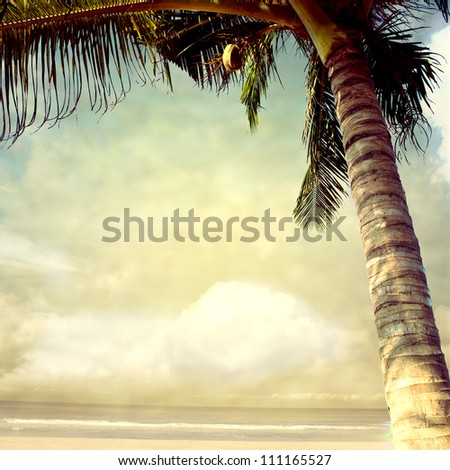 vintage palm background - stock photo