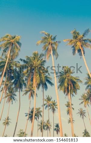 Vintage palm trees at tropical coast - stock photo
