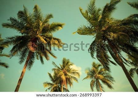 Vintage palm trees,vintage filter effect - stock photo