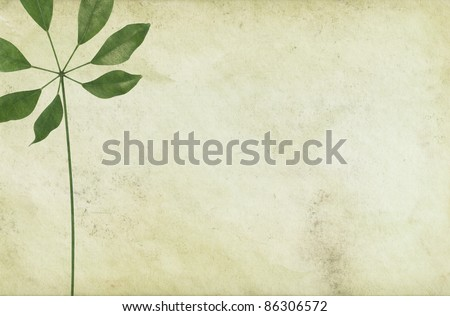 Vintage paper background and a leaf with a long foot stalk - stock photo