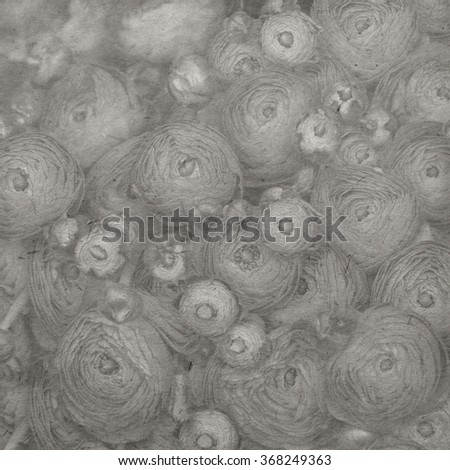 Vintage paper textures with pink persian buttercup flowers (ranunculus). Black and white - stock photo
