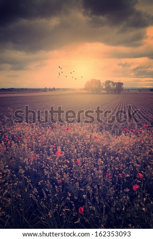 Vintage photo of agricultural scene - stock photo