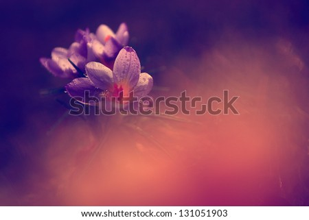 Vintage photo of beautiful wild flower - stock photo