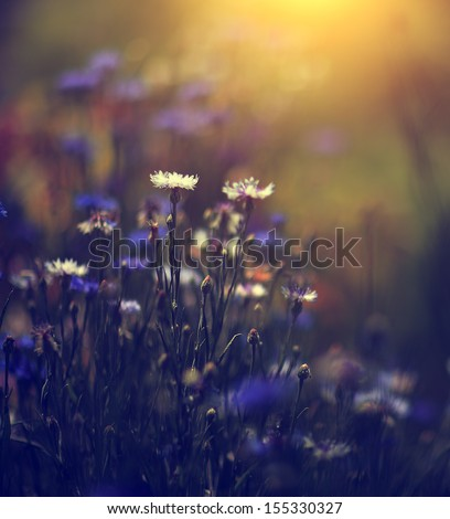 Vintage photo of beautiful wild flower - stock photo