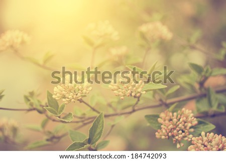 Vintage photo of blooming bush - stock photo