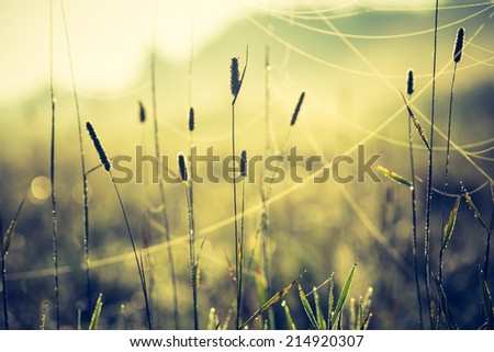 vintage photo of blooming meadow grass - stock photo