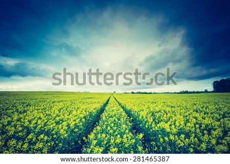 Vintage photo of blooming rapeseed field at sunrise. Beautiful agricultural landscape of calm countryside in springtime. - stock photo