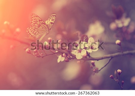 Vintage photo of butterfly and cherry blossom - stock photo