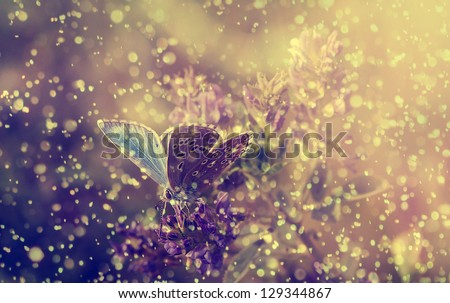 Vintage photo of butterfly in rain and sunset - stock photo