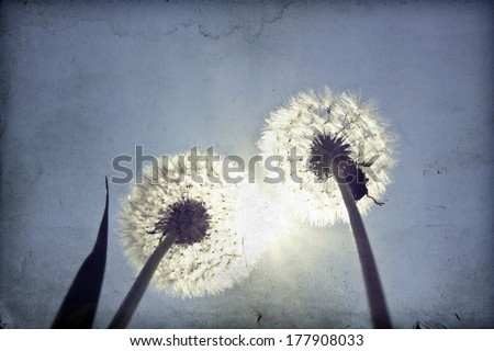 Vintage photo of dandelions and blue sky  - stock photo