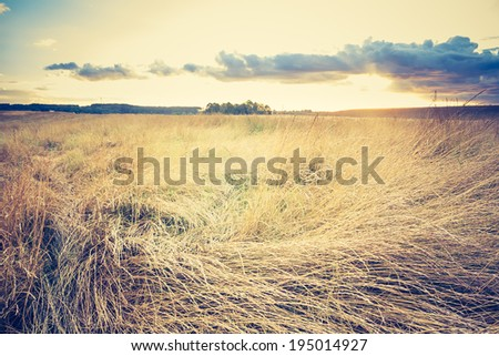 vintage photo of dry grass field - stock photo