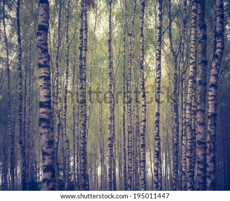 vintage photo of foggy forest - stock photo